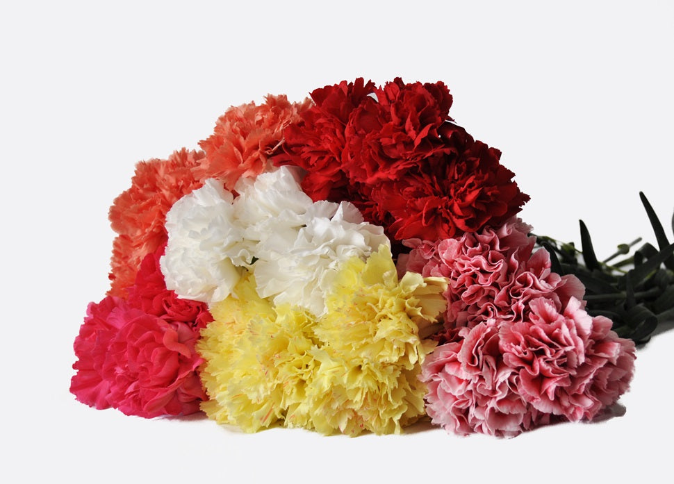 Assorted color carnations, Fresh cut flower, flowers for events, dance recitals, events, wedding flowers, wedding arrangements, flower, beautiful flowers, bulk flowers, cut flowers, wedding planners, wholesale prices,  flowers, freshly cut flowers, color flowers, decoration