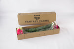 48 Fresh special shipper. In this box your carnations will arrive in a great conditions.