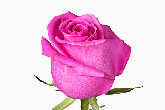 Hot Pink Roses Valentineu0027s Day. Price Per Stem Starting At $0,96
