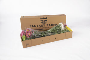 48 Fresh special shipper. In this box your daisies will arrive in perfecto conditions. Fresh cut flowers right to our recipients door.