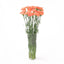 Peach carnations in their vase. This fresh cut flowers represent sweetness and joy with life.