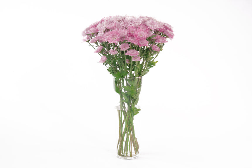 Pink Lavender daisies in their vase. This fresh flowers are symbols of faraway or departure. Daisies represent purity and new beginnings. Pink daisies are symbols of good luck and friendship.
