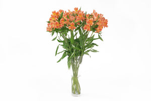 Orange alstroemerias in their vase. Alstroemerias are also known as Peruvian lily or lily of the incas. Orange alstroemerias symbolize happiness and joy.