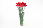 Red carnations in a vase. Carnations are symbols of love, women's love and fascination.