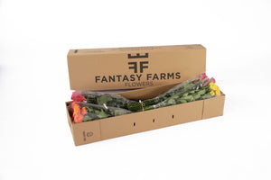 48 Fresh special shipper. In this box your spray roses will arrive in a great conditions.