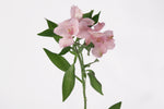 Single stem of a pink alstroemeria. Alstroemerias are also known as Peruvian lily or lily of the incas. Pink alstroemerias symbolize playfulness, sensitivity and innocence.