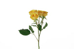 Single stem of yellow spray roses. Yellow spray roses express sunny feelings of joy, exuberance and warmth. flowers for events events flowers events decoration events wholesale prices flowers wholesale flowers wholesale best prices, wholesale roses best rose beautiful roses wholesalers export flowers fresh cut flowers fresh flowers