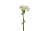 Single white carnation. White carnations are symbols of purity, pure love and good luck.
