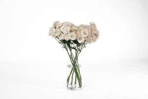 White spray roses in their vase. White roses are symbols of innocence and purity. They are associated with new beginnings and they are ideal for brides.