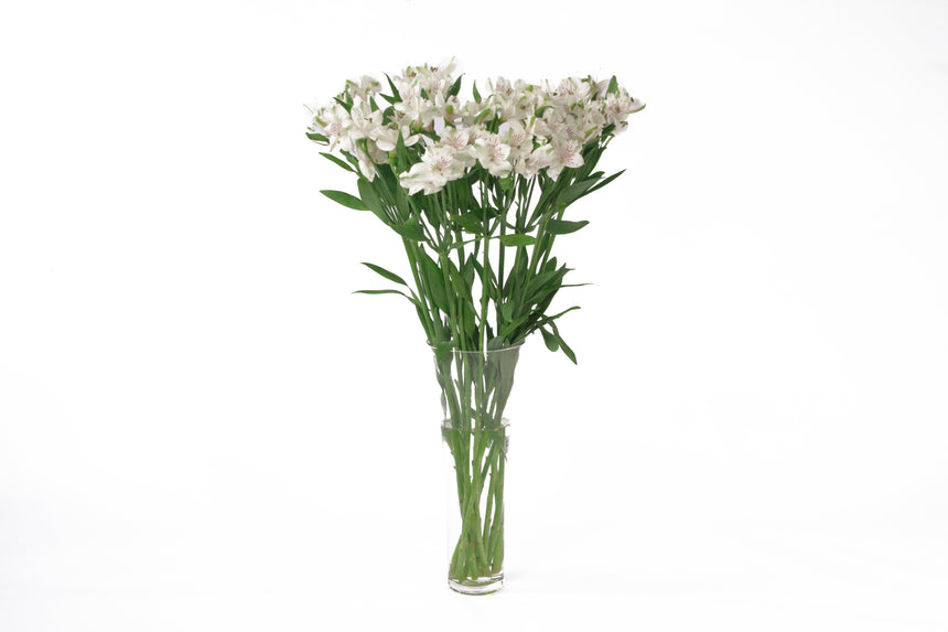 White alstroemerias in their vase. Alstroemerias are also known as Peruvian lily or lily of the incas. White alstroemerias represent purity and faith.