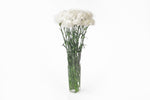 White carnations in their vase. White carnations are symbols of purity, pure love and good luck.