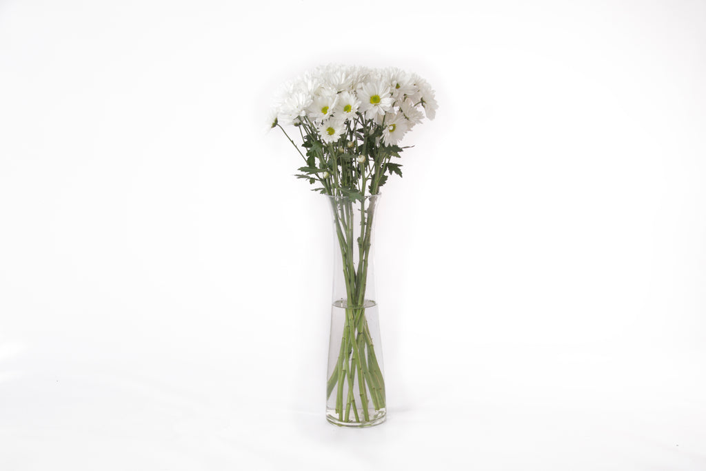 White daisies in their vase. This fresh cut flowers are symbols of faraway and departure. Daisies represent innocence, purity and new beginnings. White daisies are a representation of fertility and beauty. They are known as a symbol of childbirth and motherhood.