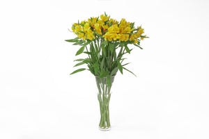 Yellow alstroemerias in their vase. Alstroemerias are also know as Peruvian lily or lily of the incas. Yellow alstroemerias symbolize trust, compassion and respect.