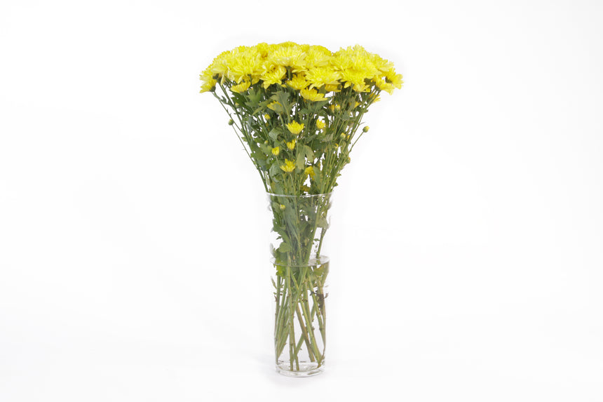 Cushion yellow flowers in their vase. This fresh cut flowers are symbols of mayor life changes in a positive way and they are known for representing balance between relaxation and adventure.