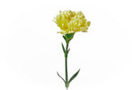 A single yellow carnation. Yellow carnations represent friendship and filial love. They also symbolize trust compassion and respect.