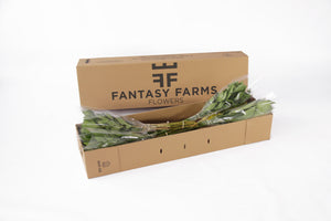 48 Fresh special shipper. In this box your greens will arrive in a great conditions.