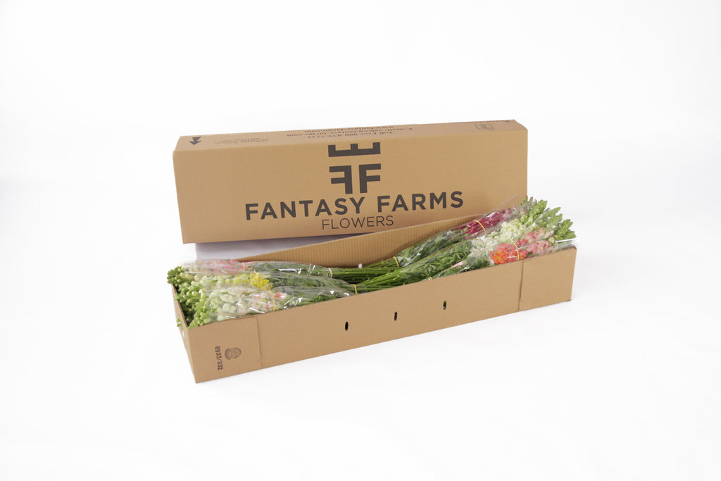 48 Fresh special shipper. In this box your snapdragons will arrive in perfect conditions. Fresh cut flowers right to our recipient's door.