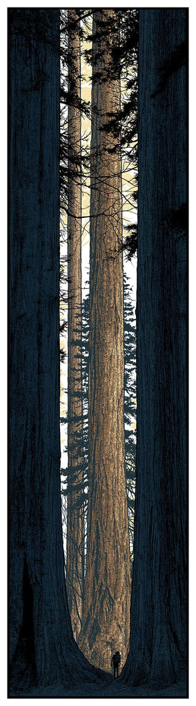 """Avenue of the Giants"" by Dan McCarthy"