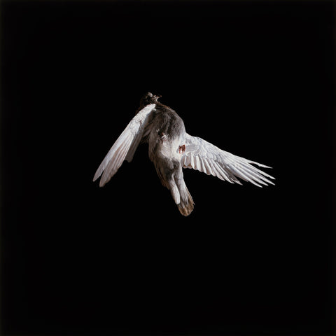 "Jeremy Geddes - ""Miserere 4"" 1st Edition - 2013"