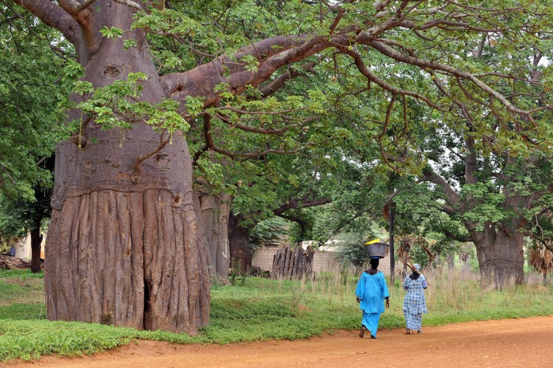 Valuing Biodiversity at Our Core: The Story of Our Baobab