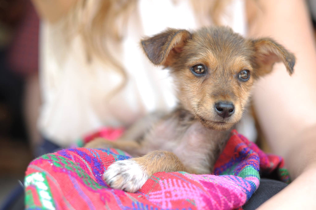 hiptipico ethical fashion rescue pup guatemala