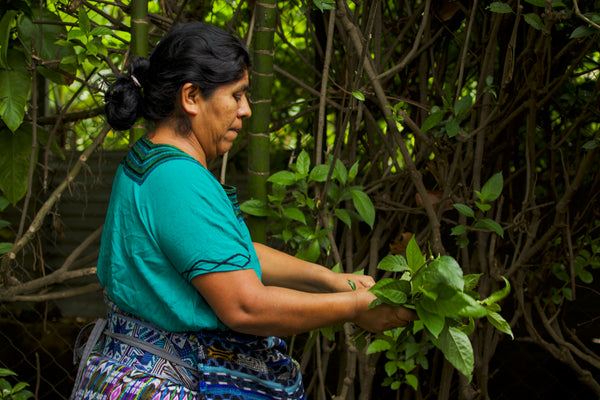 Artisan partner Rosa gathers leaves to prepare natural textile dyes, ethical fashion brands that use natural dyes, maya dying process, tz'utujil weaveers