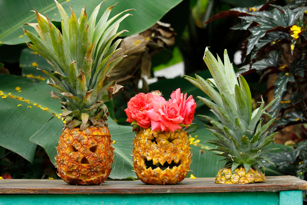 pineapple jack-o-lantern, pinterest halloween, pinterest pineapple, pineapple carving, hiptipico blog, alyssaya blgo