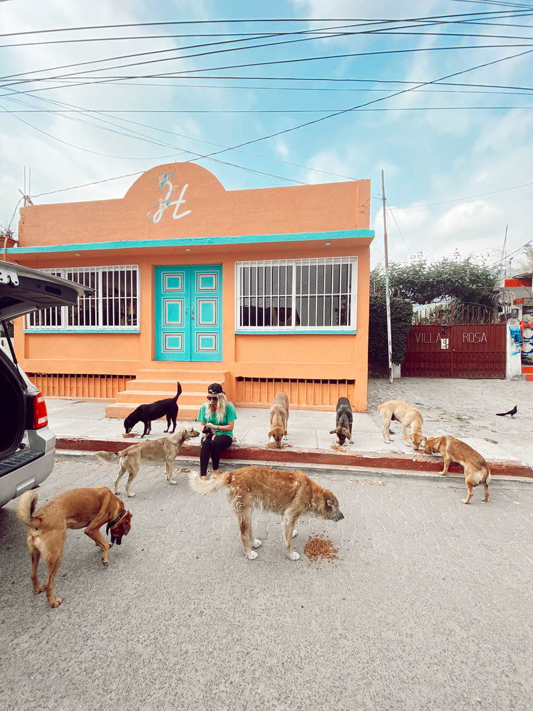 Feed Street Dogs Guatemala Donate COVID Corona Relief Fund