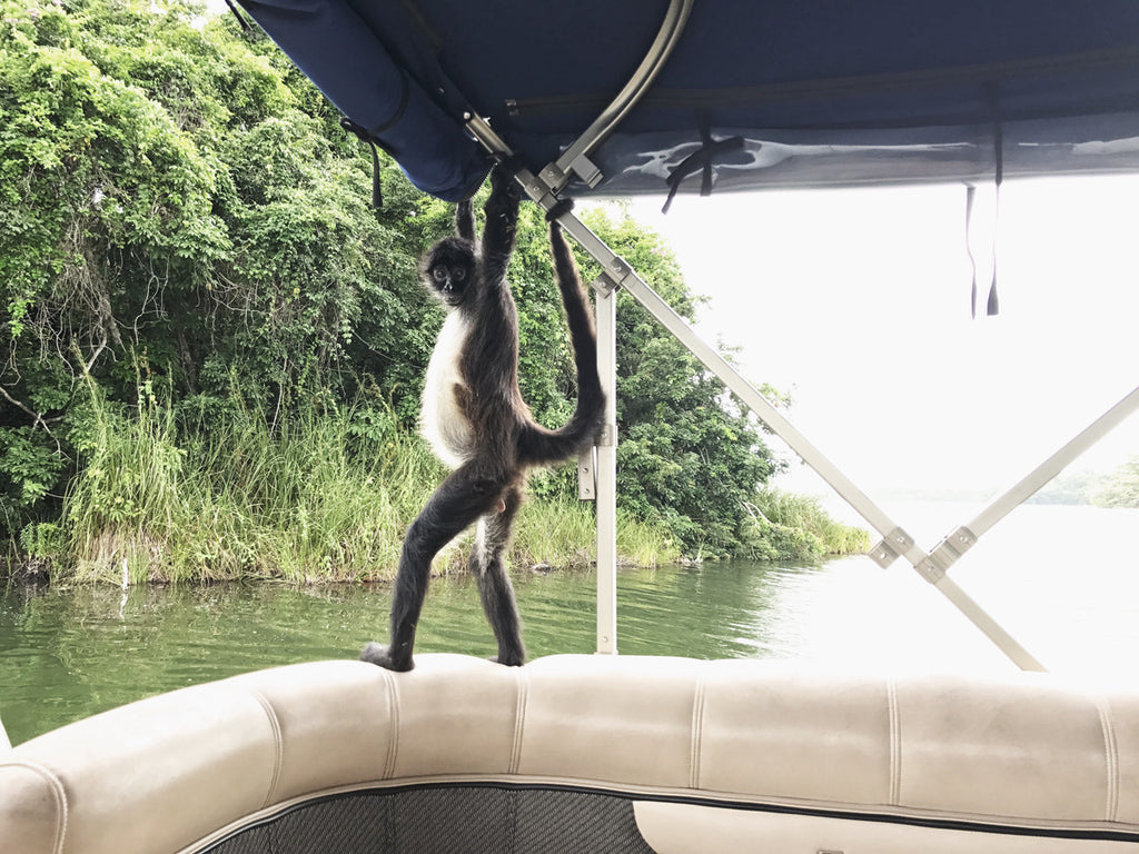 A monkey has climbed onto a boat and is holding the railings of the boat