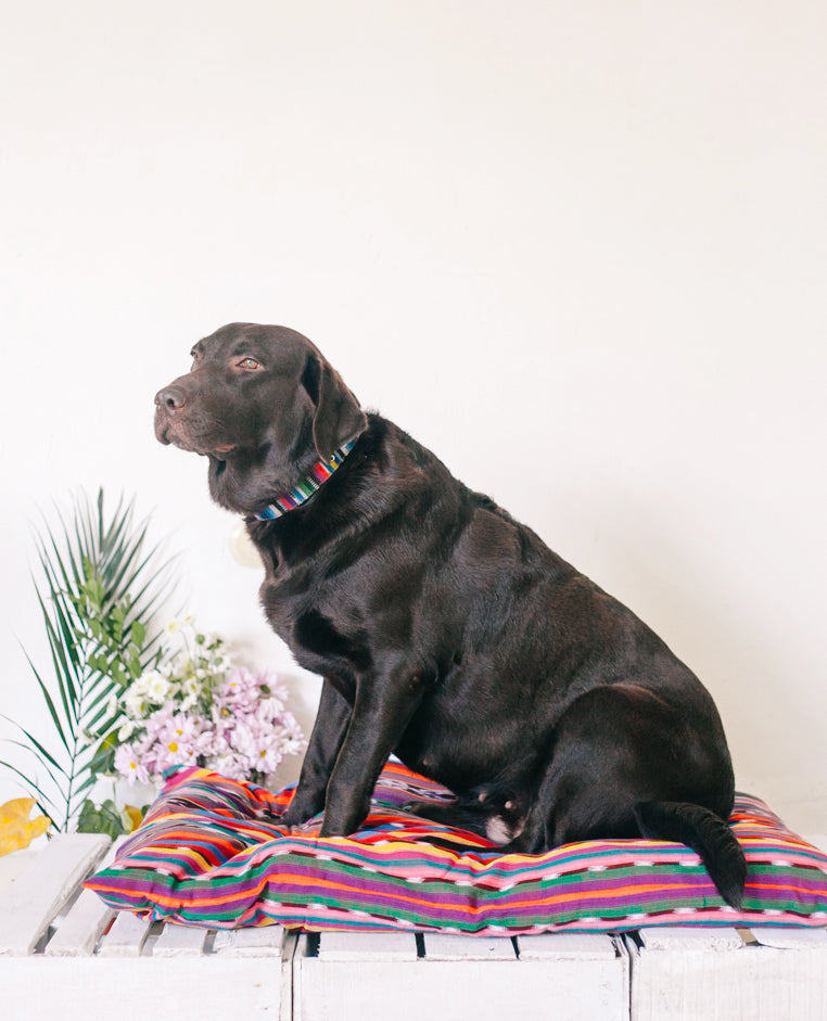 Large Dog Bed Cover - Arco Iris