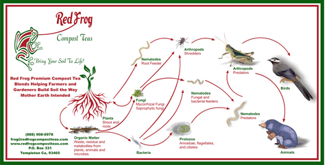 Red Frog soil food web