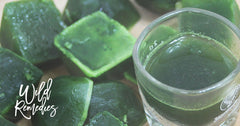 Easy Wheatgrass Shots For The Whole Week (No Juicer Required!)