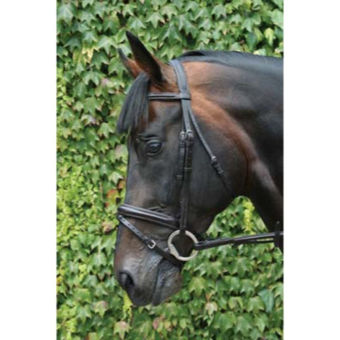 Mackey Legends Flash Bridle