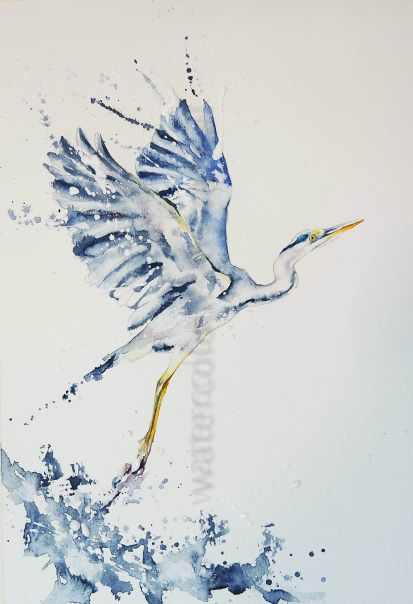Painting a Heron taking off !