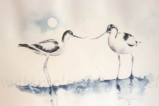 How to paint avocets in 5 easy steps