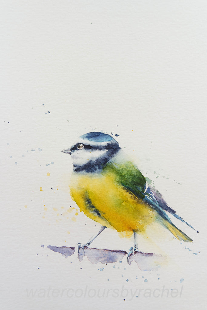 How to paint a blue tit in 5 easy steps.....