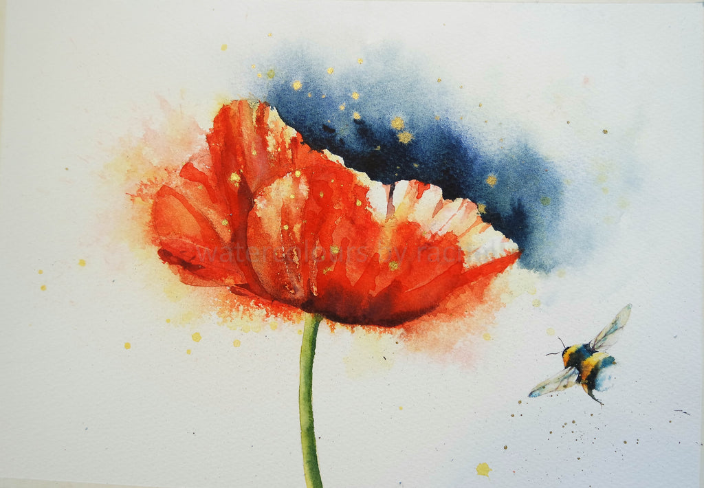 A bright loose poppy