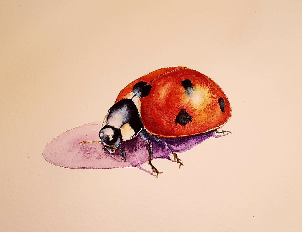 How to paint a ladybird