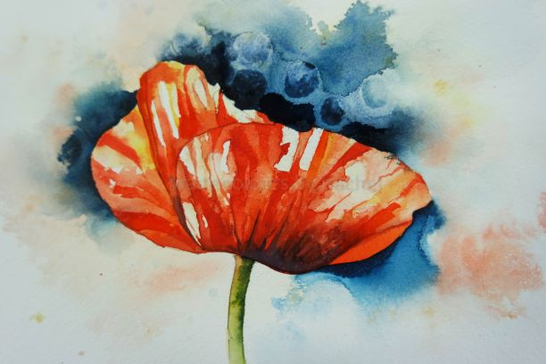 Painting a poppy by the seat of your plants!