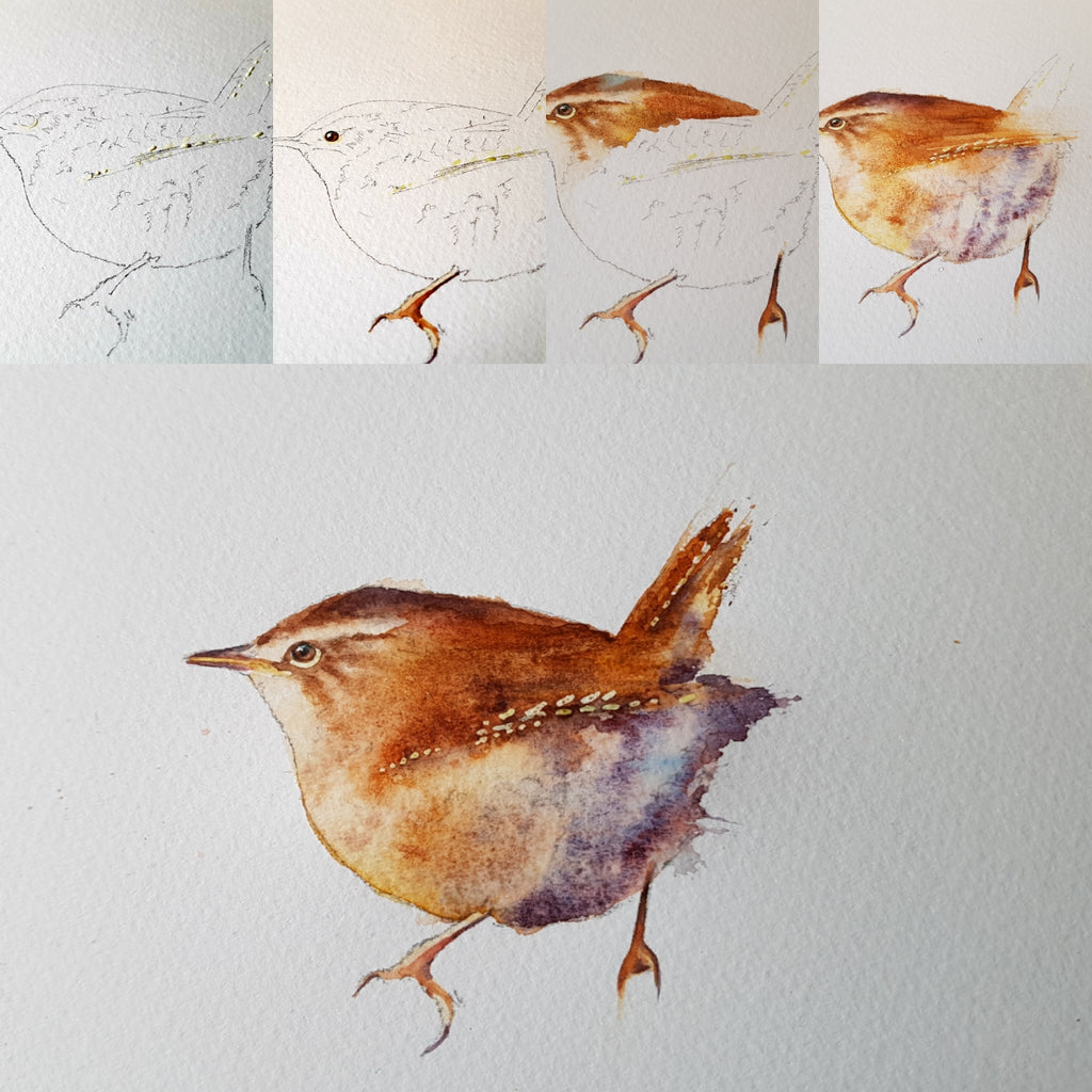 A wren painting in 5 detailed steps....
