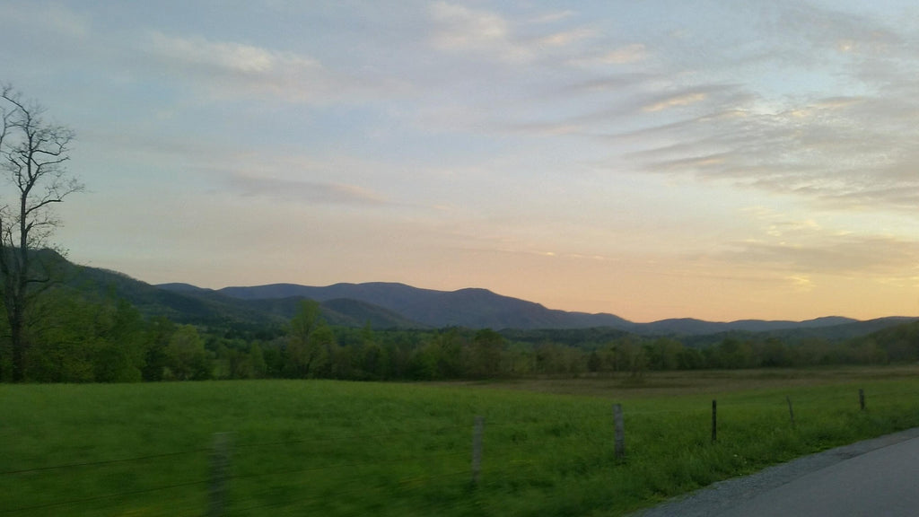 cades cove wildlife loop tourism