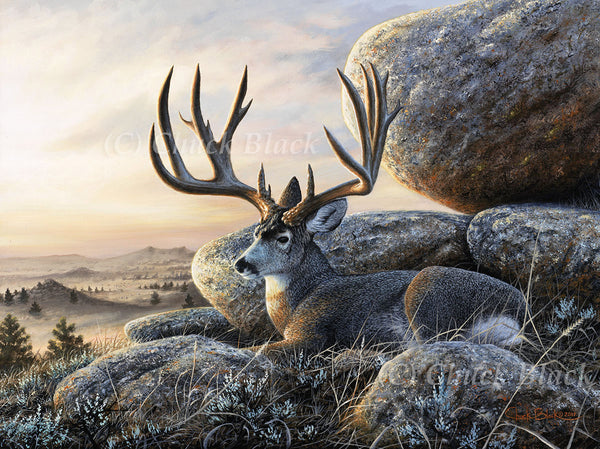 "Mule Deer Buck Canvas Art Print - ""The Law Maker"""