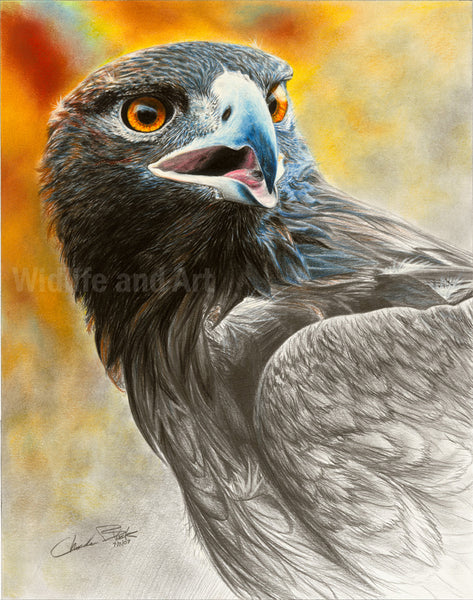 "Golden Eagle Limited Edition Print - ""More Precious Than Gold"" - art print - original art - Wildlife and Art by Chuck Black"