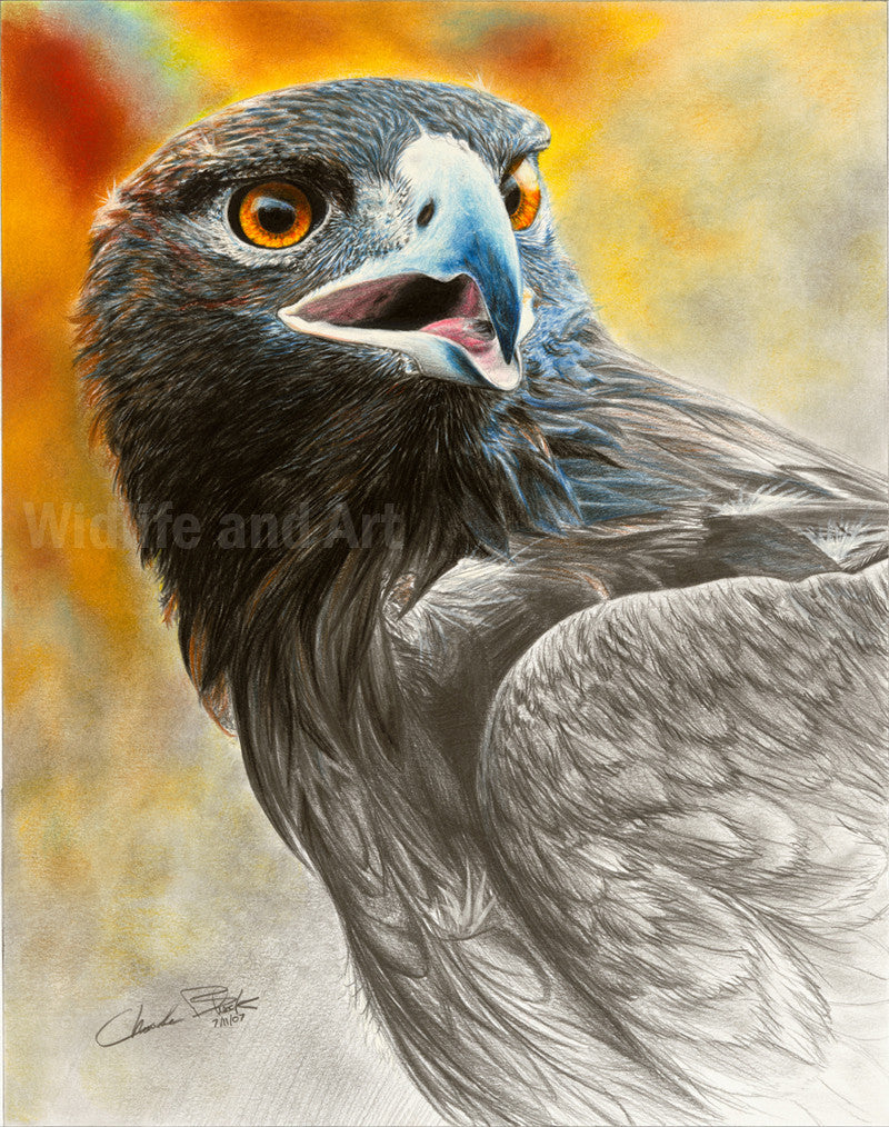 "Golden Eagle Canvas Art Print - ""More Precious Than Gold"" - art print - original art - Wildlife and Art by Chuck Black"