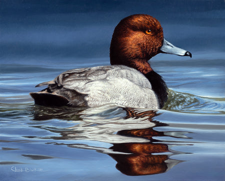 """Drifting Along"" 8x10"" Redhead Waterfowl Painting"