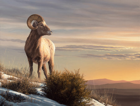 """Waiting For Spring"" 12x16 Bighorn Sheep Painting"