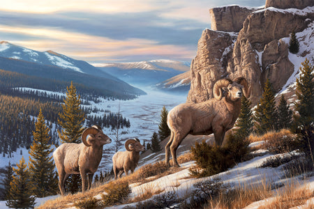 """Western Beauty"" - Bighorn Sheep Wildlife Art Print"