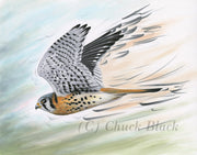 Art Print - Wildlife and landscape art by Chuck Black