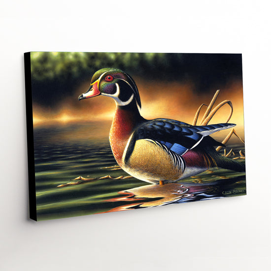 "Wood Duck Canvas Art Print - ""Backwoods Marsh"""