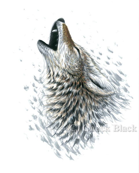 "Howling Coyote Limited Edition Print - ""Winter Calls"" - art print - original art - Wildlife and Art by Chuck Black"
